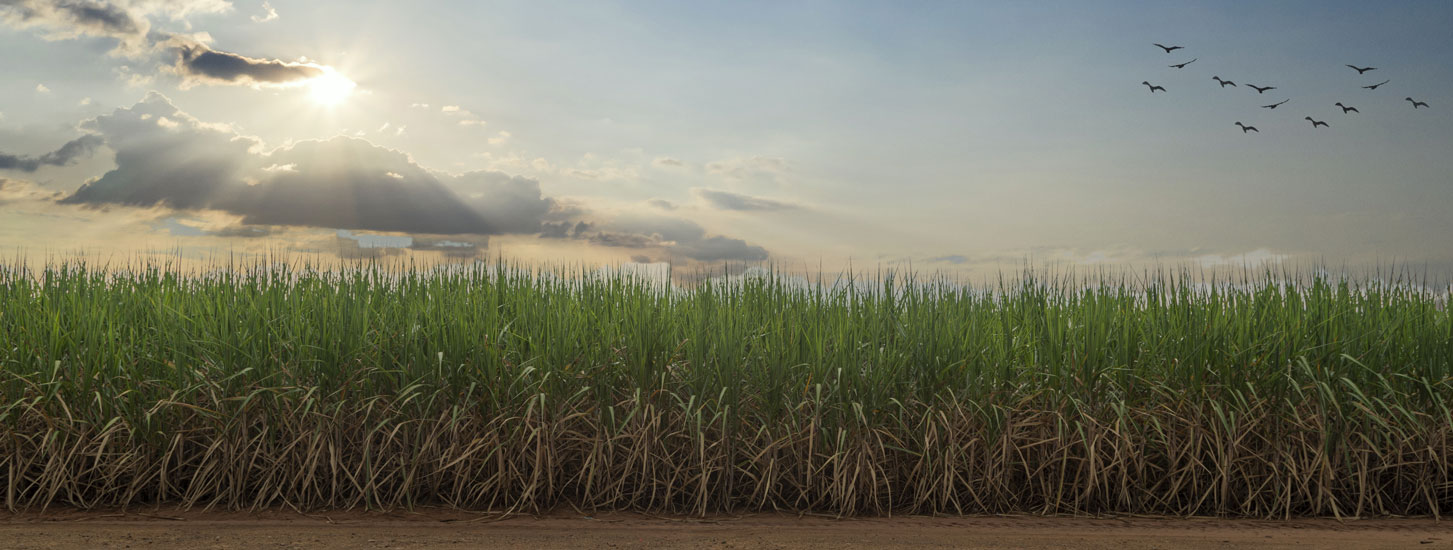 top-products-sugarcane